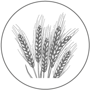 info-inhaltsstoffe-weizenprotein